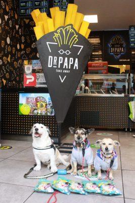 Dr. Papa pet friendly